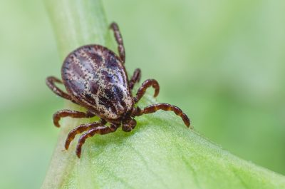 LYME 101 - vocabulary – Life Health & Research Center